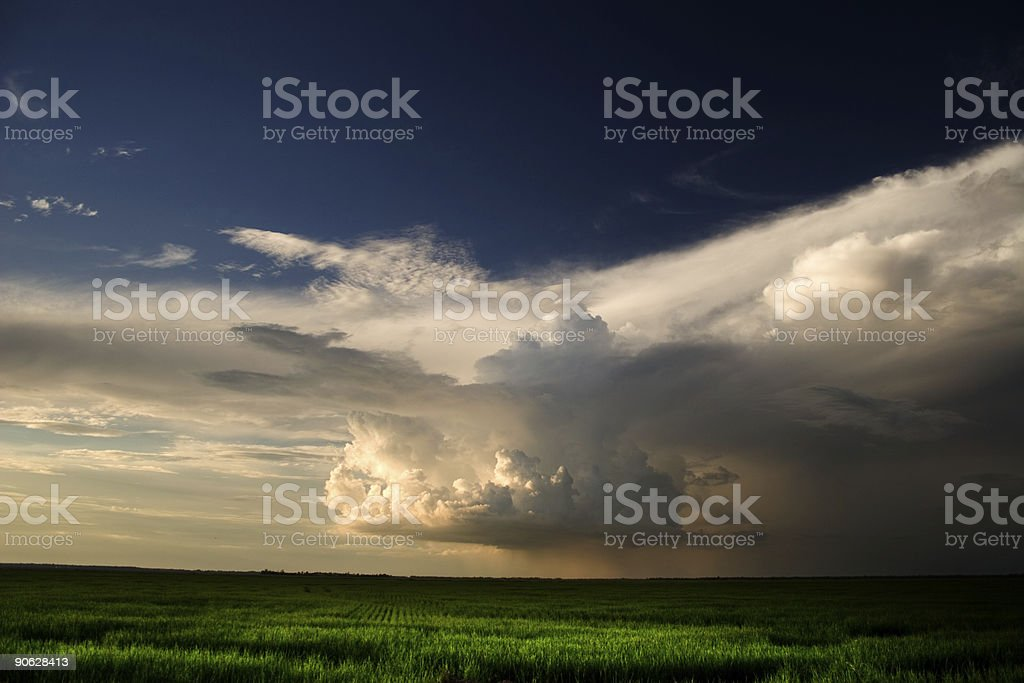 rain in the field royalty-free stock photo