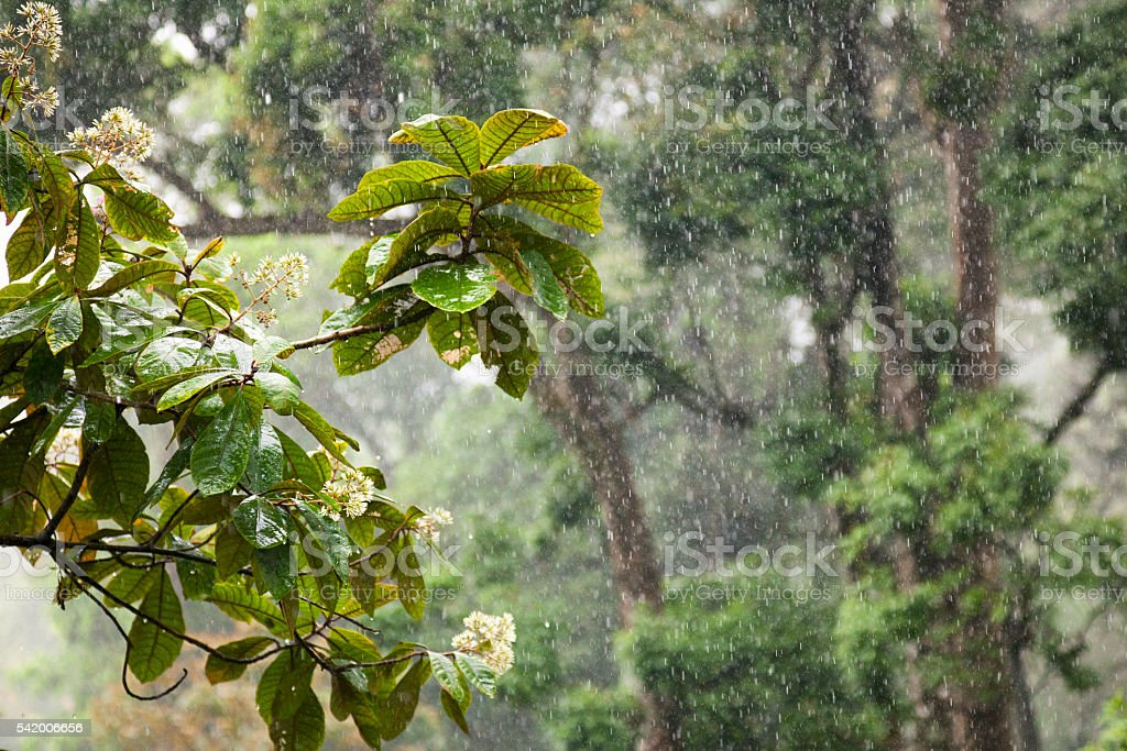 Rain in the Western Ghats, India stock photo