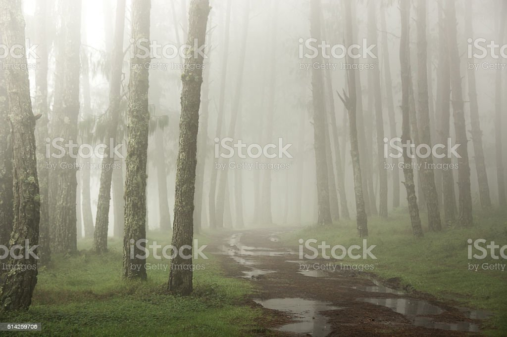 Rain Path stock photo