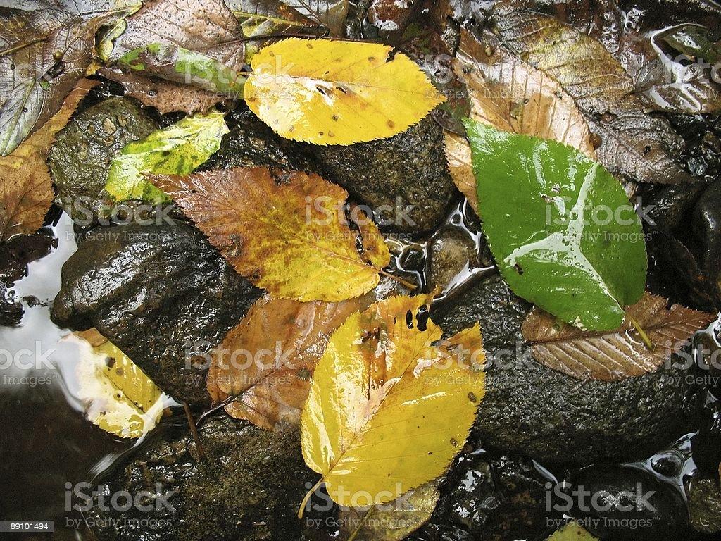 Rain Soaked Autumn stock photo
