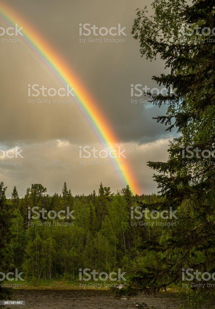 rainbow above taiga forest stock photo