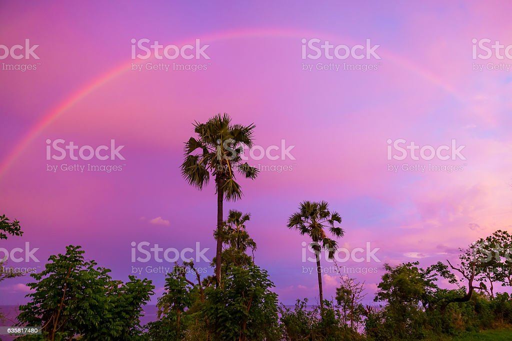 Rainbow at sunset and palm trees stock photo