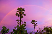 Rainbow at sunset and palm trees