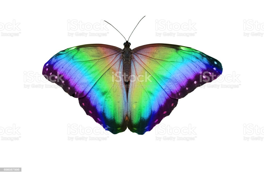 Rainbow Butterfly stock photo