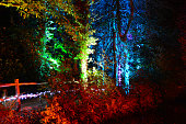 Rainbow Coloured Trees at Night