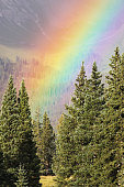 Rainbow Forest Mountain Landscape