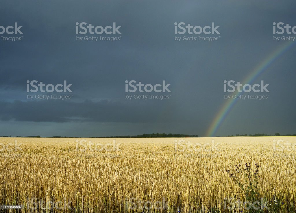 rainbow in field royalty-free stock photo