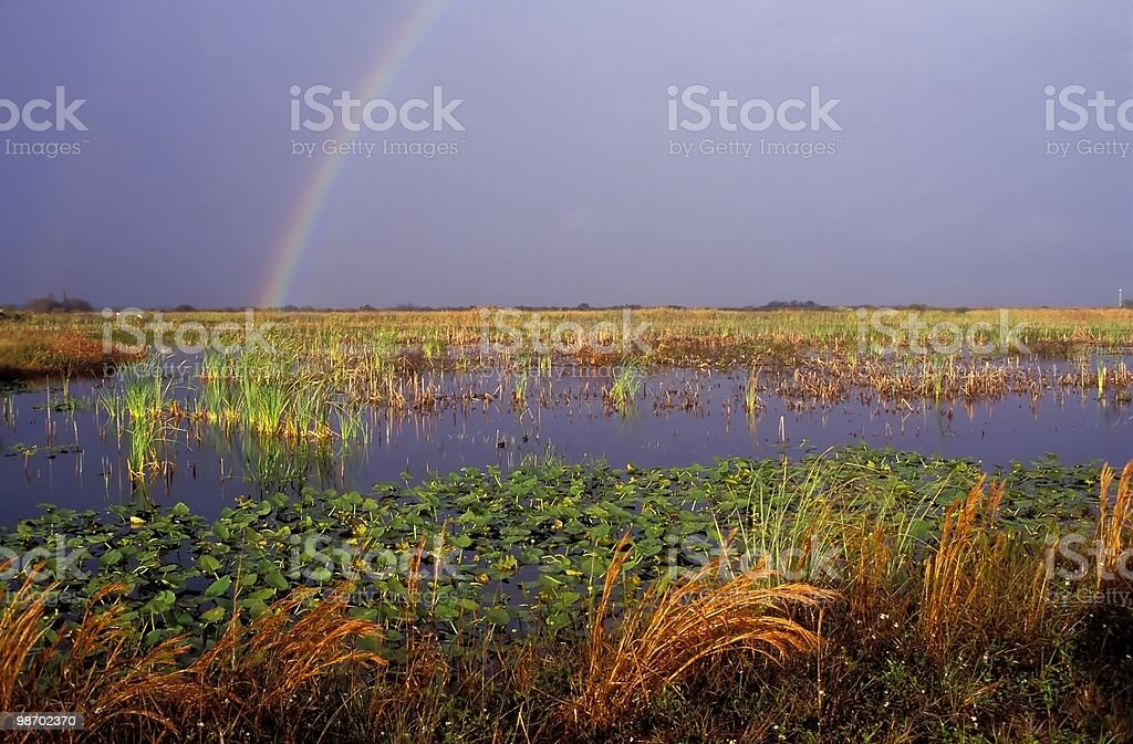 Rainbow in the sky over Everglades royalty-free stock photo