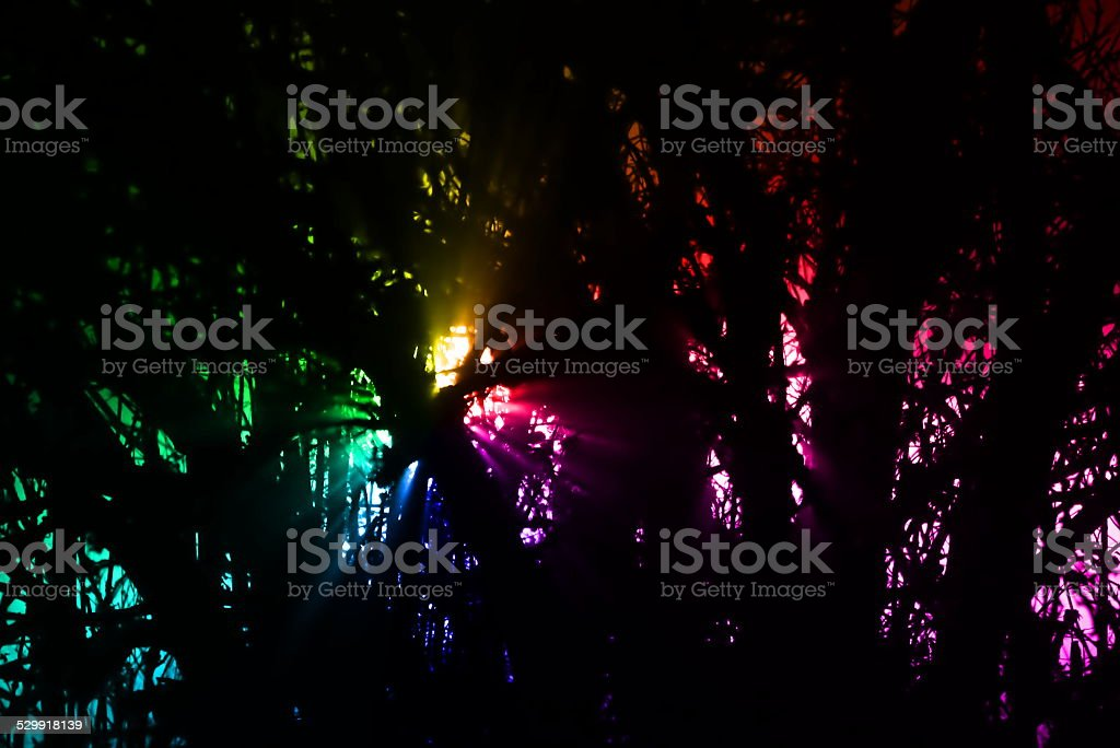Rainbow Lights In Forest stock photo