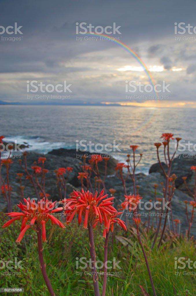 Rainbow on the coast stock photo