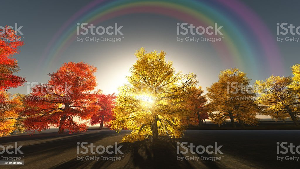 Rainbow over autumn trees stock photo
