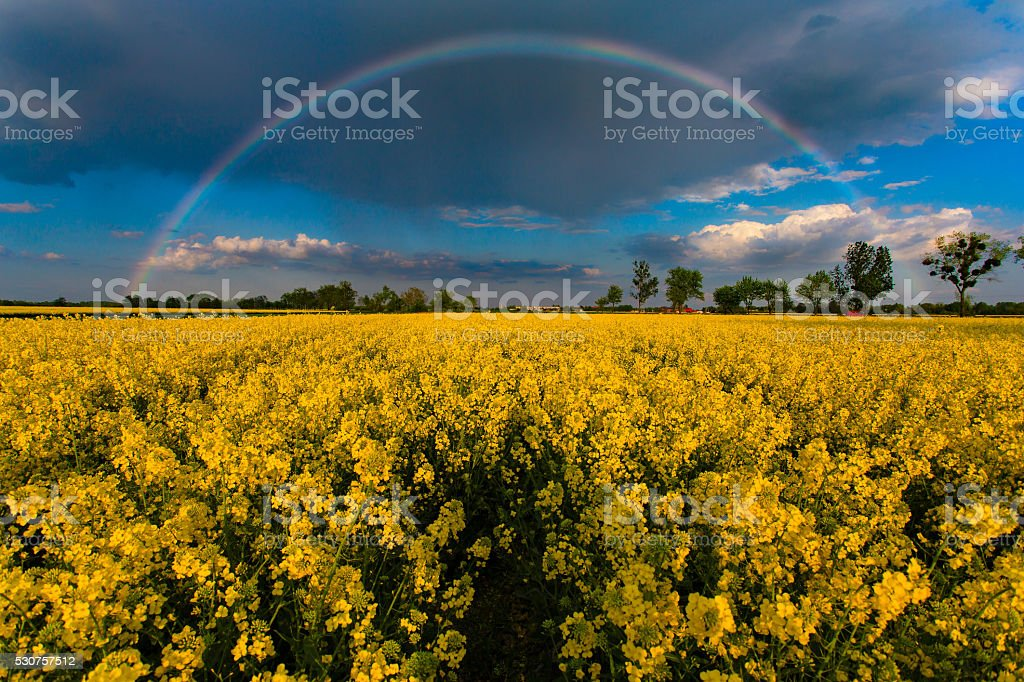 Rainbow over field stock photo