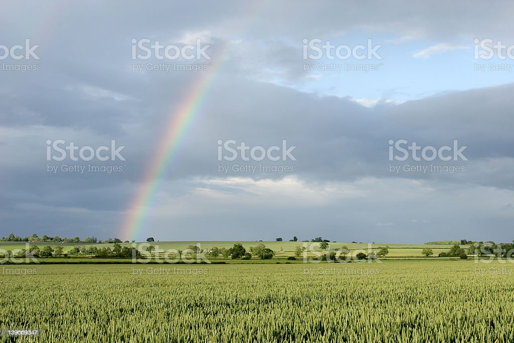 Rainbow over fields of wheat royalty-free stock photo