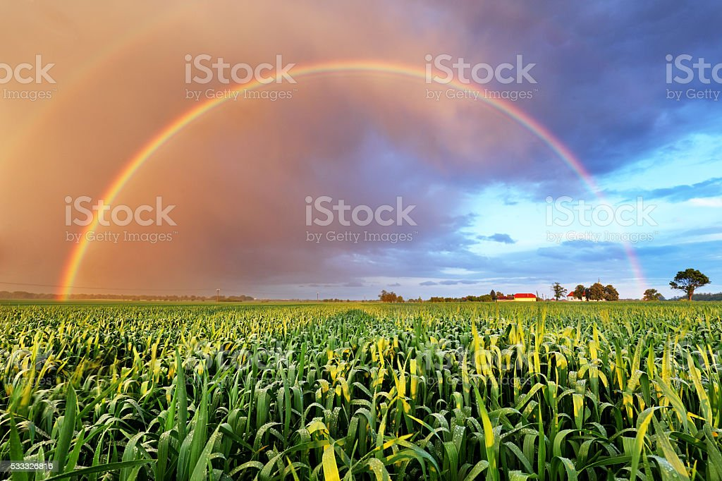 Rainbow over wheat field, nature landscape stock photo