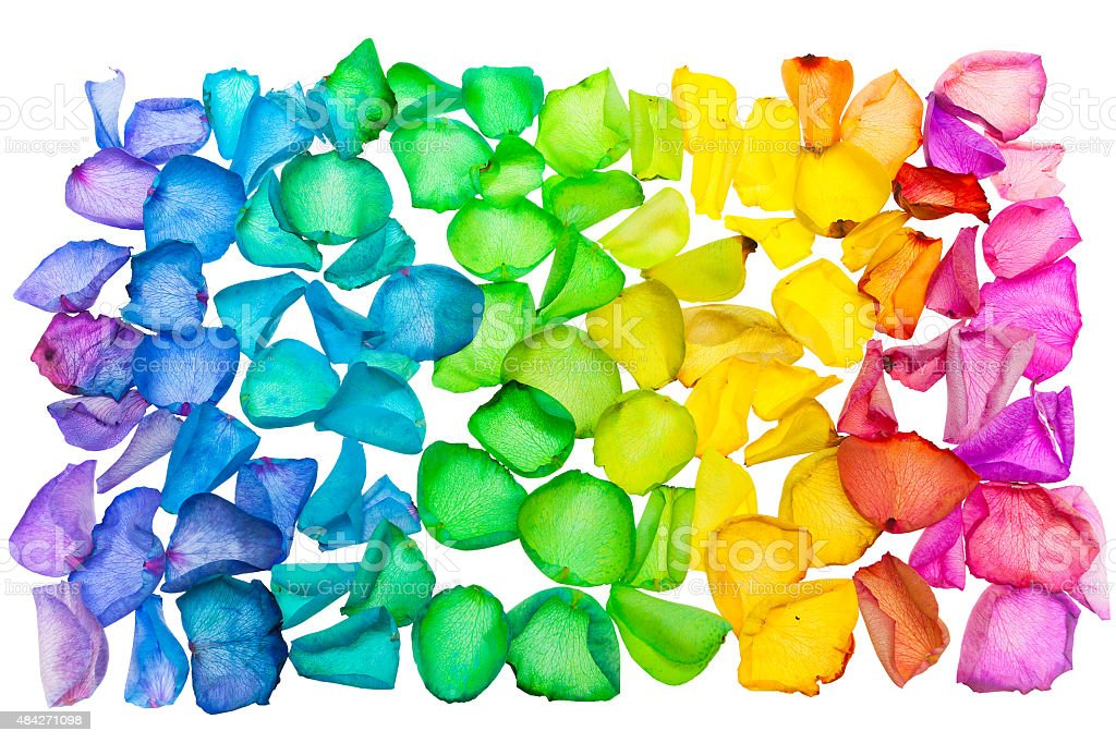 Rainbow Spectrum Of Dyed Rose Petals royalty-free stock photo