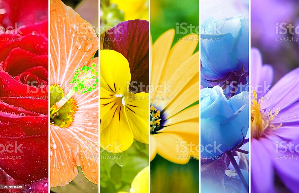 Rainbow stripes flowers wallpaper. Large XXXL image. stock photo