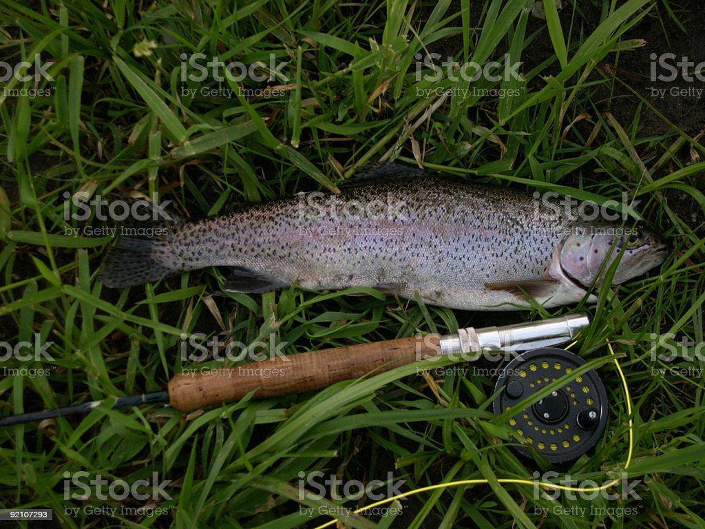 Rainbow Trout and Rod & Reel stock photo