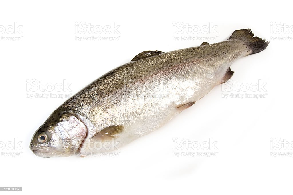 Rainbow trout whole on a white studio background royalty-free stock photo