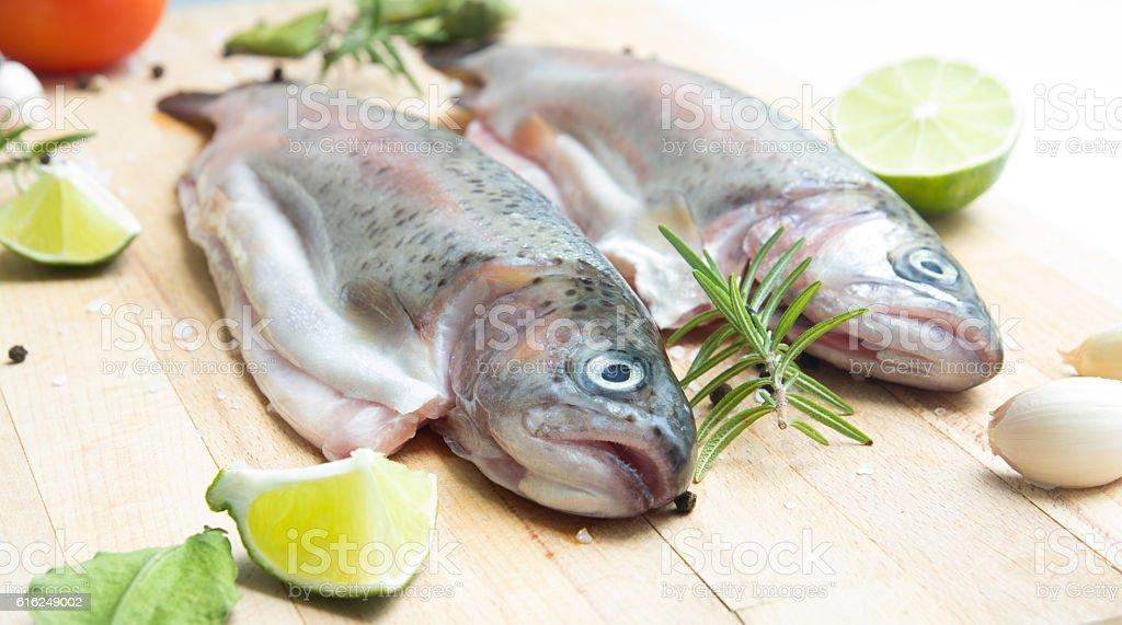 rainbow trouts stock photo