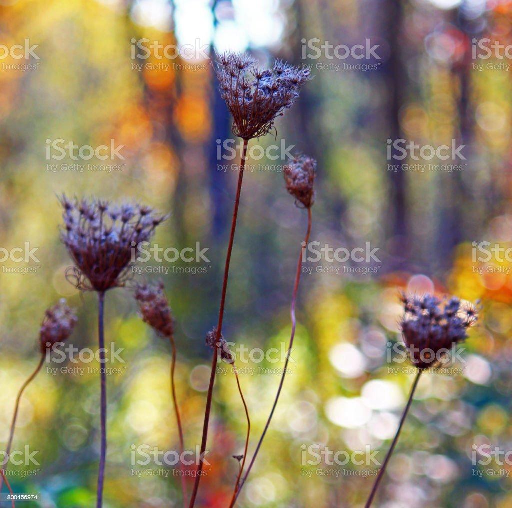 Rainbow woods stock photo
