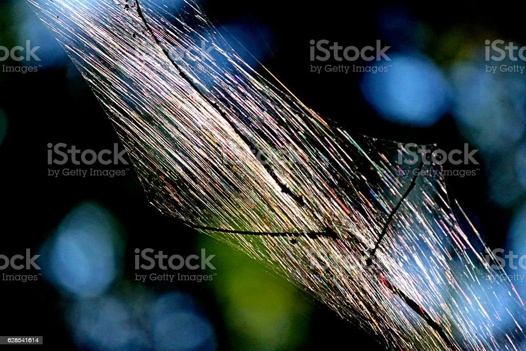 Rainbows Glowing On Tent Caterpillar's Dwelling stock photo