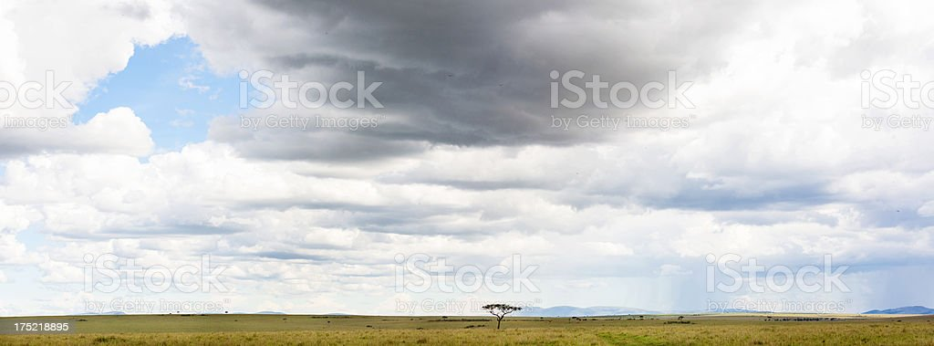 Rainclouds coming in over East African savannah. Panorama. royalty-free stock photo