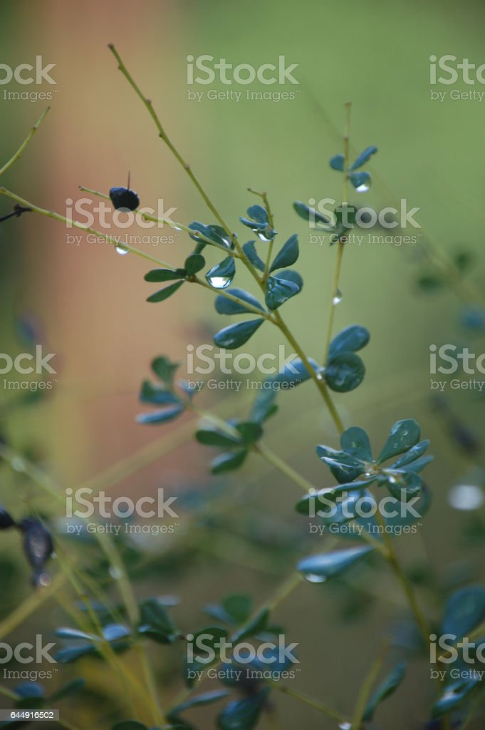 Raindrop on a Plant Stem and Leaves stock photo