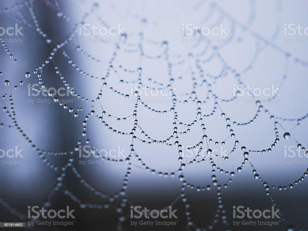 Raindrop on cobweb royalty-free stock photo