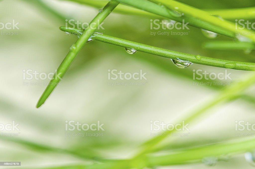 raindrop on grass stock photo