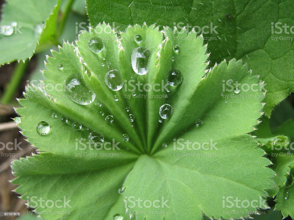 Raindrops are falling royalty-free stock photo