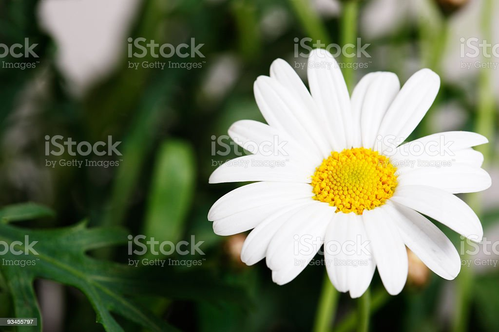 Raindrops on a flower royalty-free stock photo