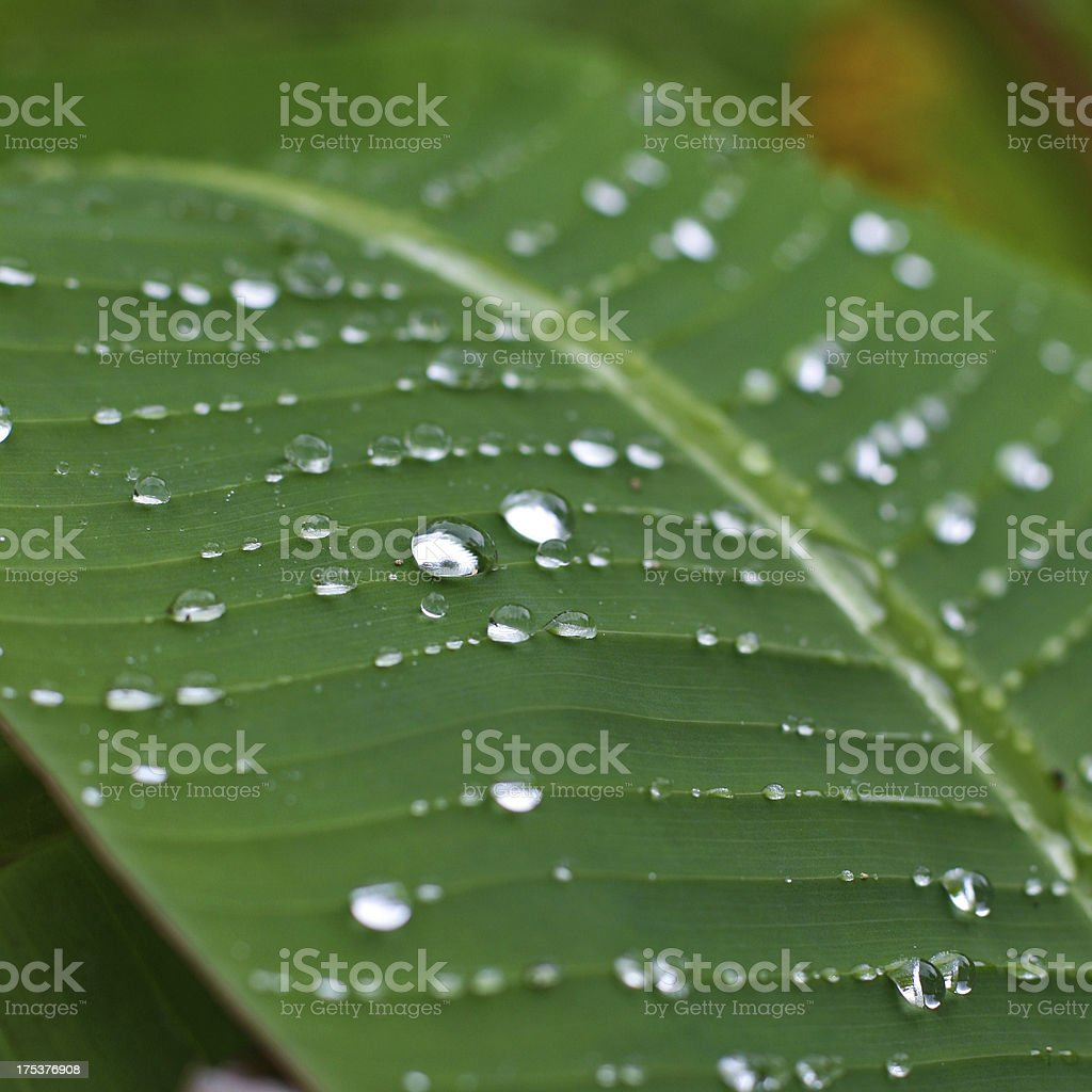 raindrops on a green palm leave stock photo