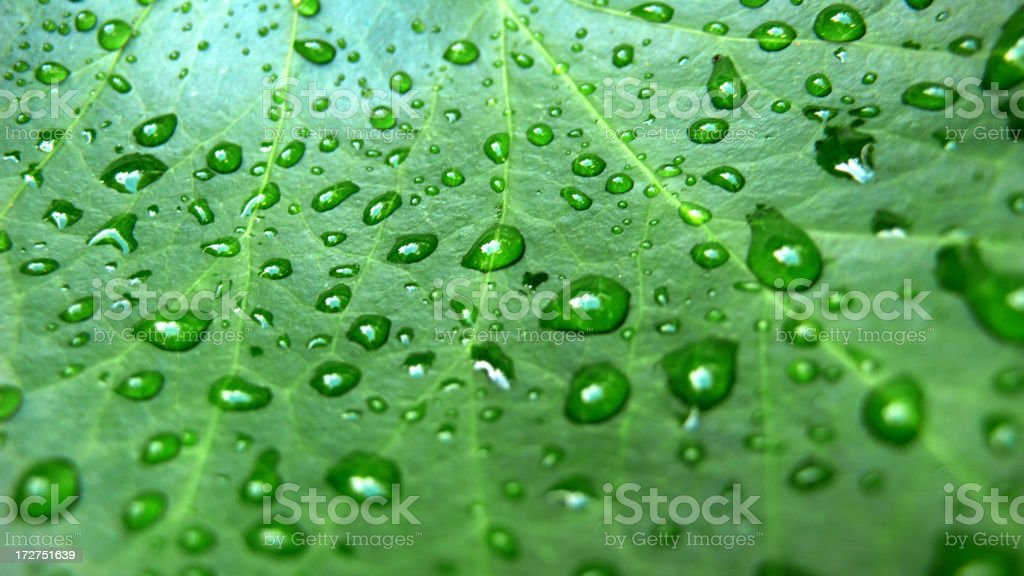 Raindrops On A Leaf. royalty-free stock photo
