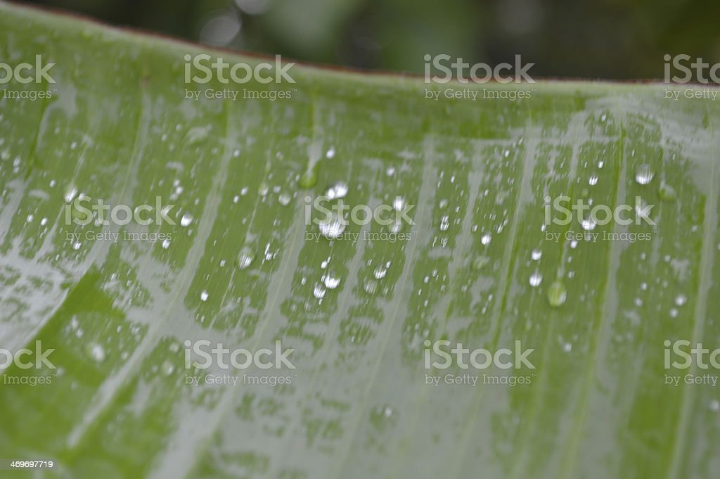 Raindrops On A Leaf stock photo