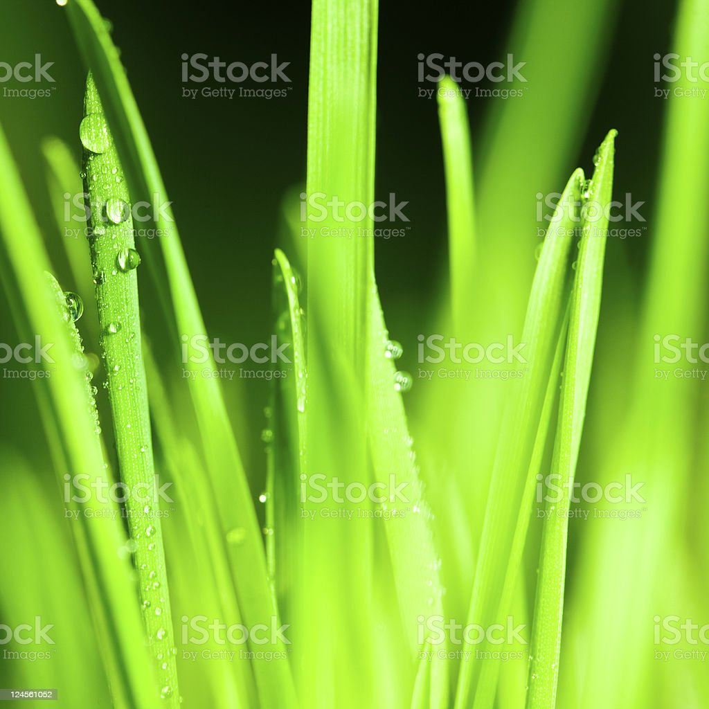 Raindrops on blades of grass royalty-free stock photo
