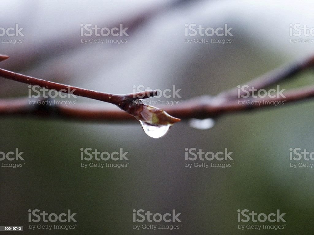 raindrops on bud royalty-free stock photo