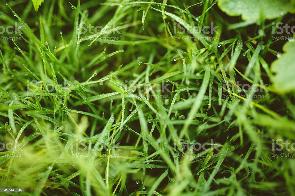 Raindrops on Green Grass stock photo