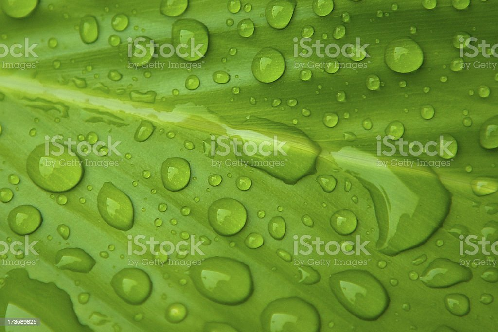 Raindrops on green leaf royalty-free stock photo