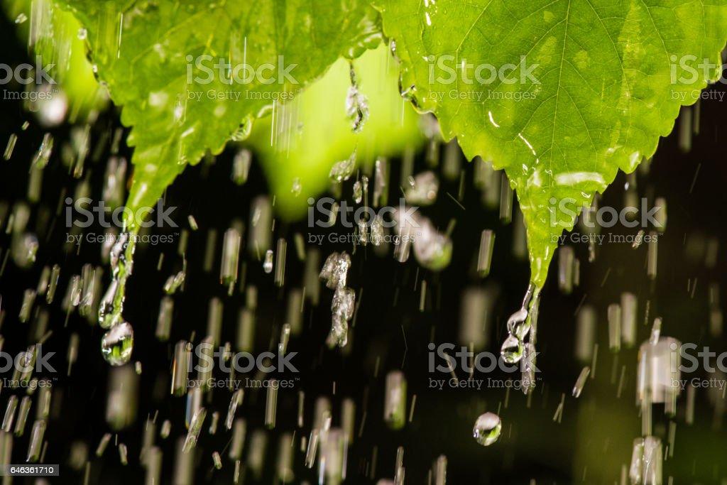 Raindrops on leaves stock photo