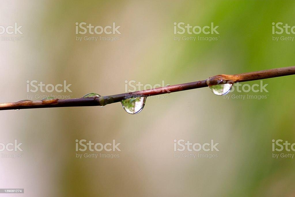 raindrops on twig royalty-free stock photo