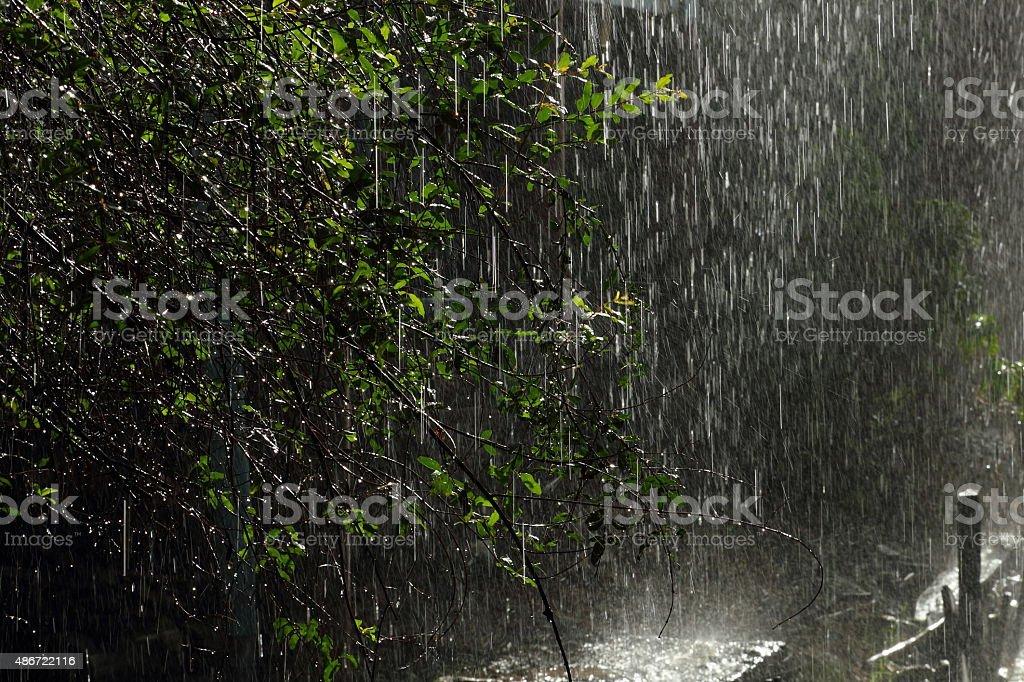 Rained stock photo