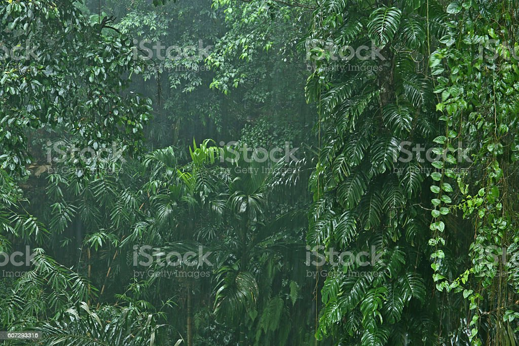 Rainfall in the jungle stock photo