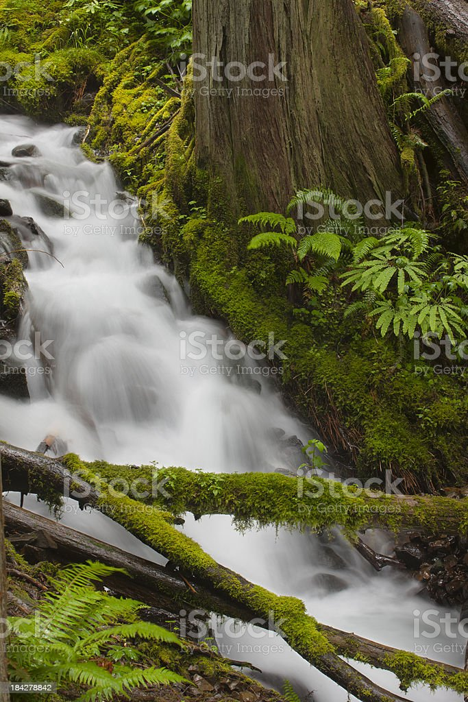 Rainforest Abstract stock photo