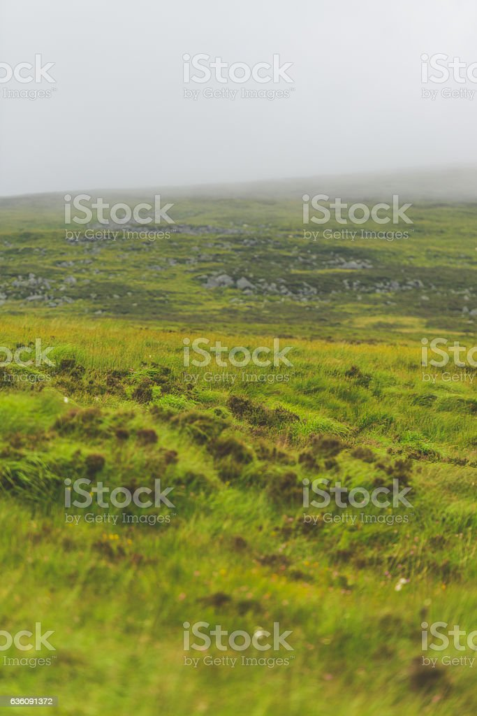 Rainforest and Peat bog land in Ireland, Wicklow Mountains stock photo
