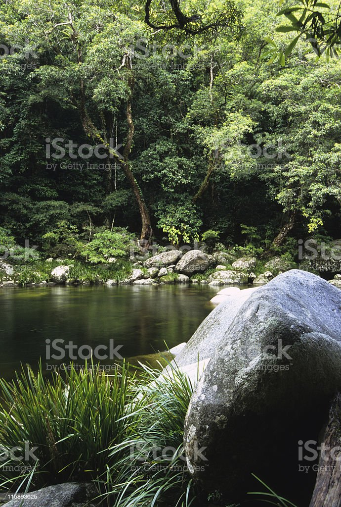 Rainforest and River, Mossman Gorge, Australia royalty-free stock photo