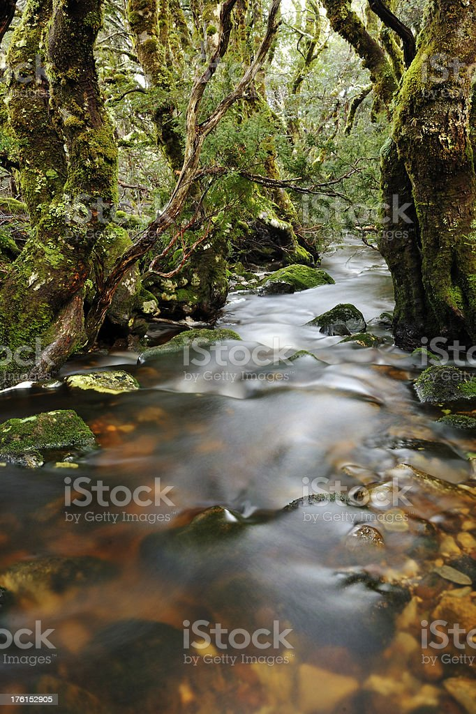 Rainforest and stream royalty-free stock photo