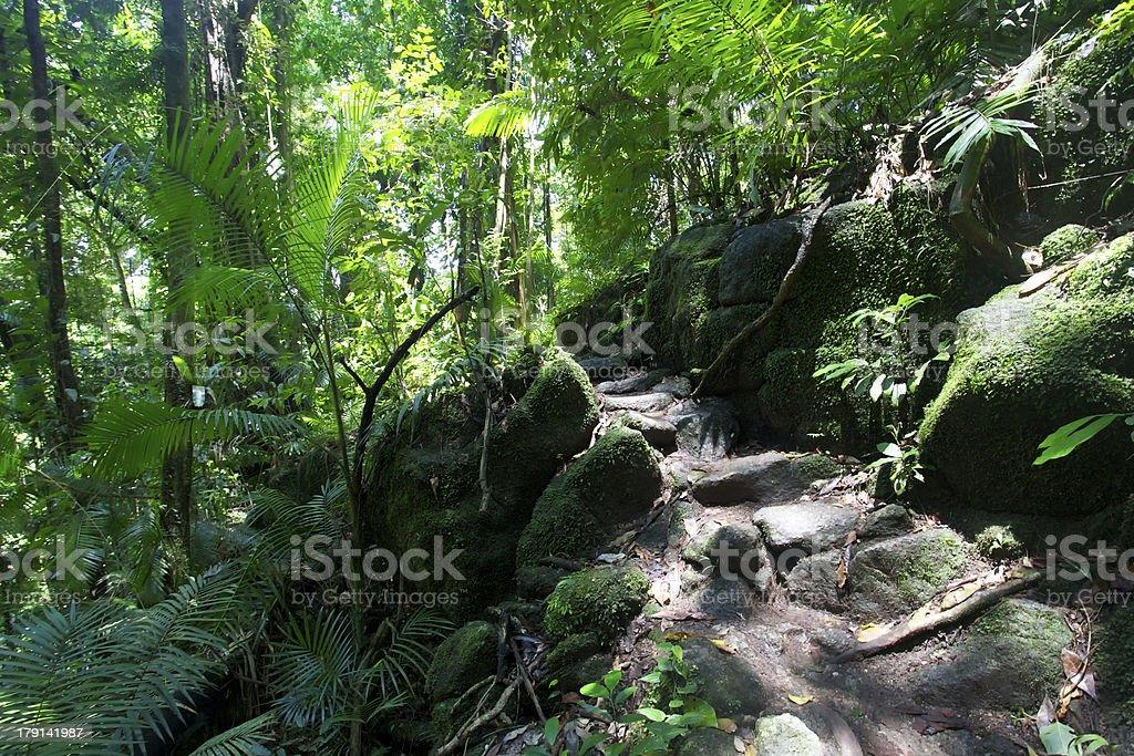 Rainforest at Mossman Gorge Daintree National Park stock photo