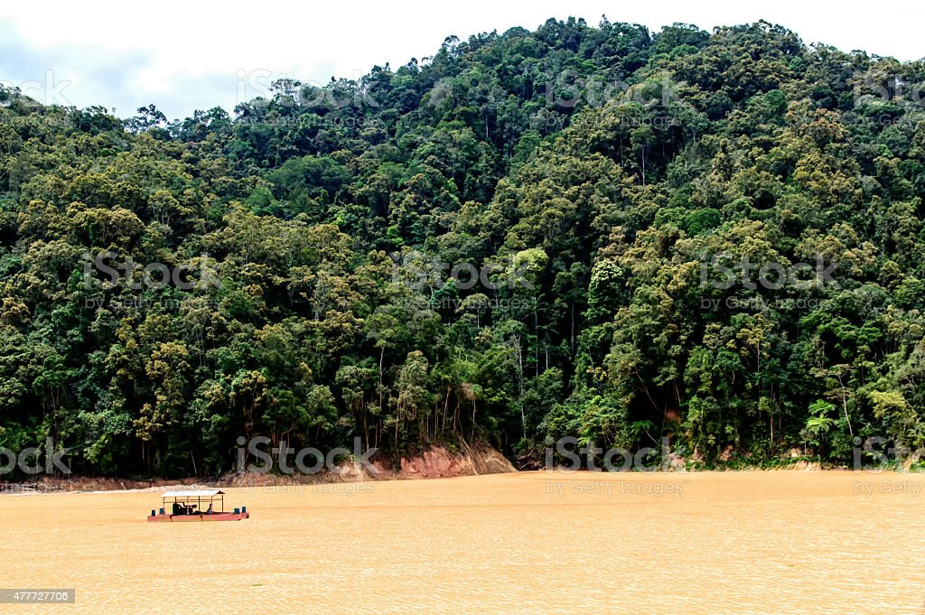 Rainforest boat stock photo