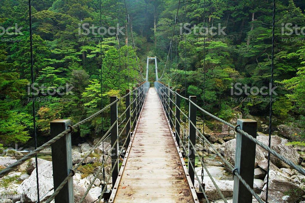 Rainforest bridge in Yakusugi Land on on Yakushima Island, Japan stock photo