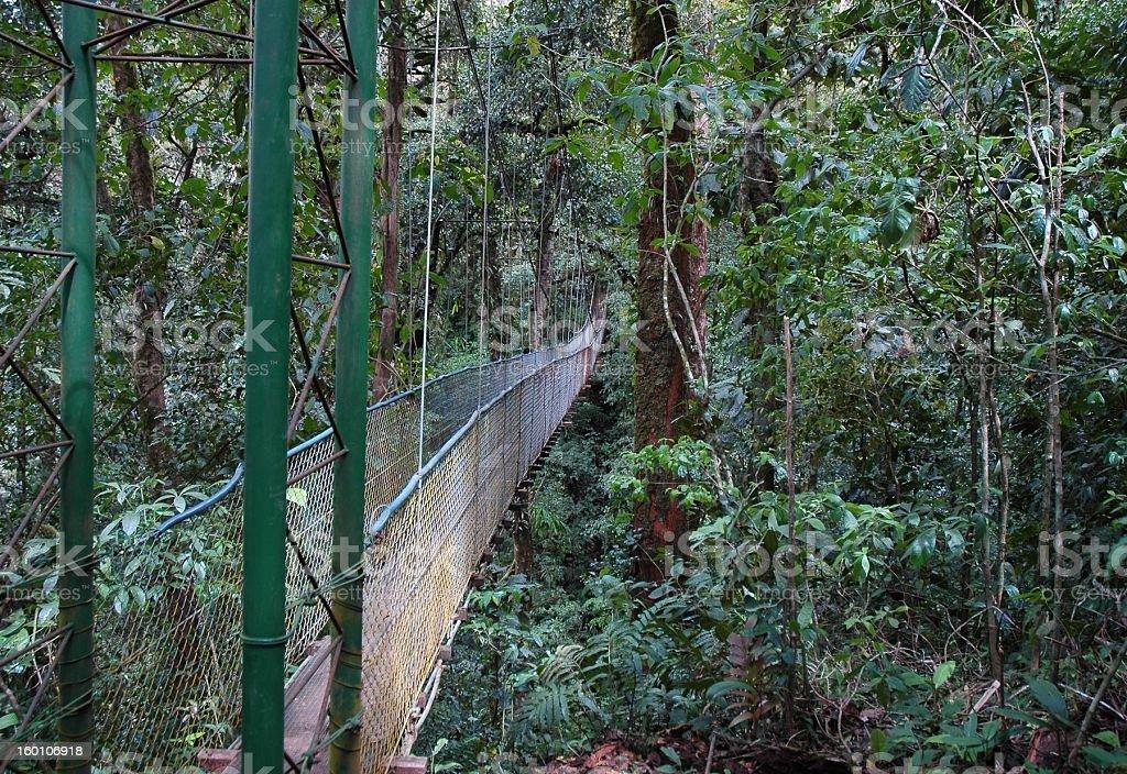 Rainforest bridge royalty-free stock photo